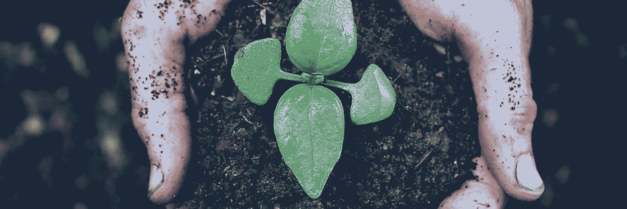 Рослин проростає з грунту